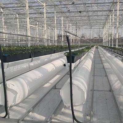 草莓吊挂温室